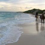 Anguilla Horses